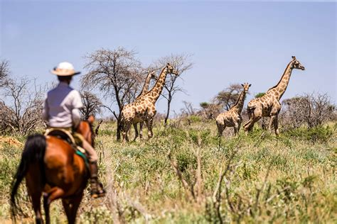 Ride Arabian horses on an endurance safari in Namibia ...