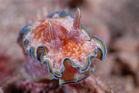 wallpaper nudibranch deep sea corals alona beach