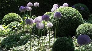 Schattenpflanzen Winterhart Fr Den Garten Beispiele