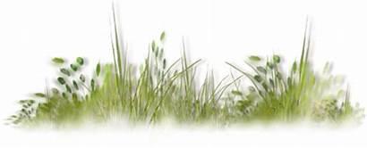 Grass Watercolor Nature Herbe Transparent Architecture Photoshop
