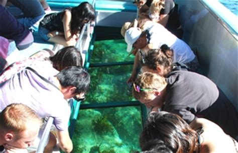 Glass Bottom Boat Tours Leigh by Glass Bottom Boat Goat Island Marine Reserve Tours Leigh