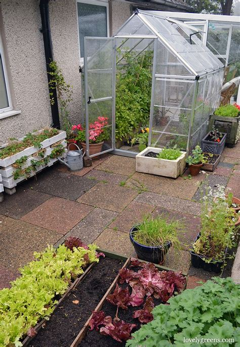 Growing Salad Greens And Edibles In A Greenhouse And