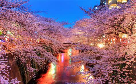 Hd Wallpaper Laptop by Blossom Hd Wallpaper Hd Wallpapers