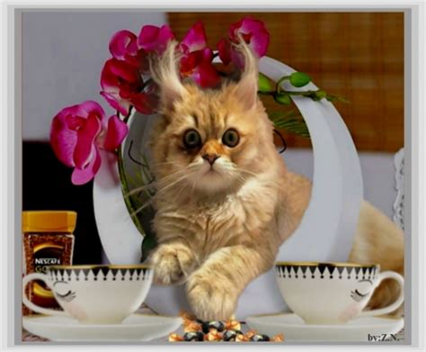 Morning Animal Wallpaper - morning coffee with cat cats animals background