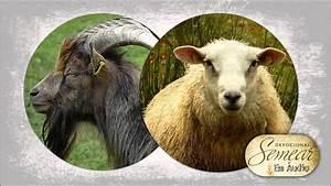 42  Devocional Semear - Bode Ou Ovelha