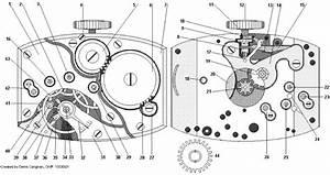 Identifying Watch Movements