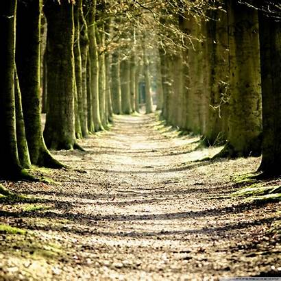 Path Lined Tree Tablet Background Wallpapers Mobile