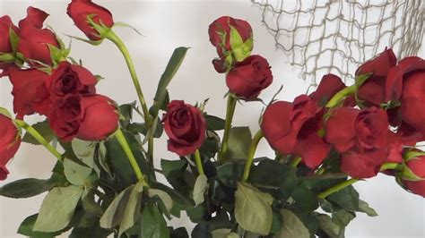 how to revive wilted roses - How To Revive Roses In A Vase