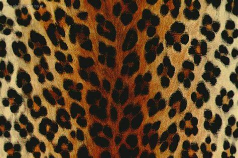 Animal Print Hd Wallpaper - leopard print hd wallpaper impremedia net