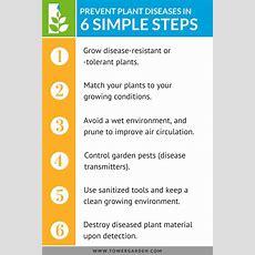 Defend Your Plants From Destructive Diseases