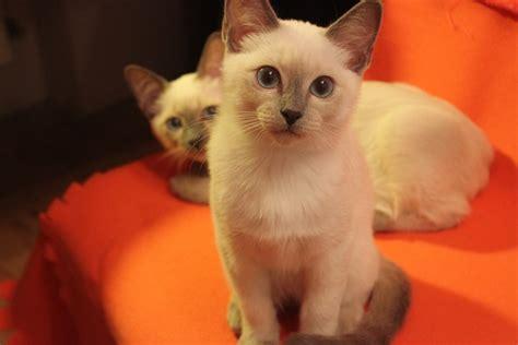 Kaķēni | Tajas kaķi