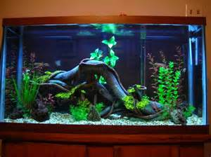 Cool Freshwater Fish Tank Ideas