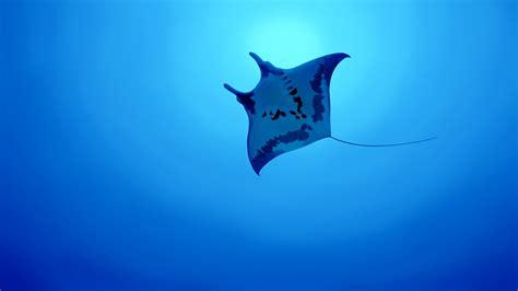 fond decran illustration animaux poisson bleu sous