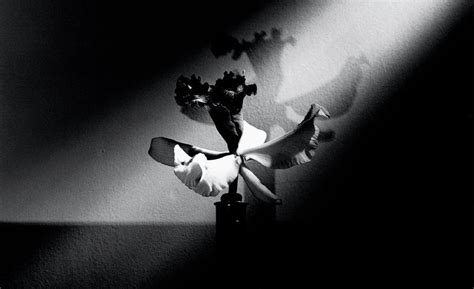 mapplethorpe fiori 10 black and white flowers by mapplethorpe that will