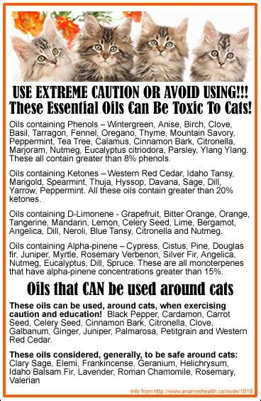 cats essential oils 17 best images about aromatherapy and essential oils on pinterest myrrh essential oil
