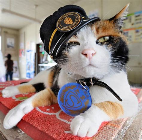 This Legendary Cat Worked As A Stationmaster For Eight Years