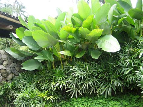 green foliage outdoor plants creative idea garden fence ideas using green plants and elegant outdoor fireplace also brown