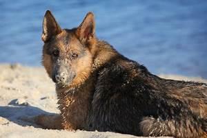Bodenbelag Für Hunde Geeignet : badeseen f r hunde in nrw welche seen geeignet sind ~ Lizthompson.info Haus und Dekorationen