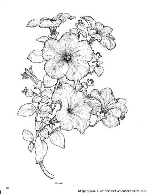 petunias  wynomatomey petunia tattoo flower coloring