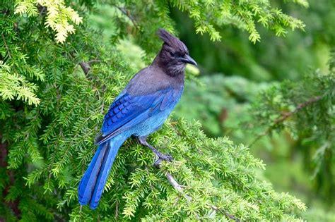 bird watching around vancouver british columbia magazine