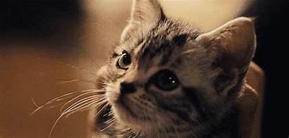 Cat Attention Person Photobucket Cats Catnip Factoids