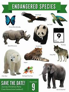 Endangered Animals With Names
