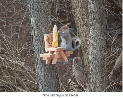 squirrel feeder chair woodworking projects plans