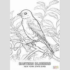 New York State Bird Coloring Page  Free Printable Coloring Pages