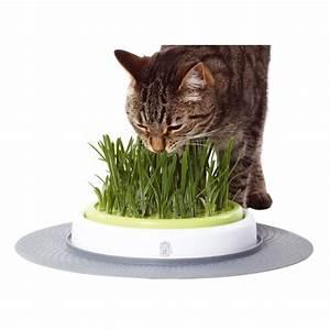 Herbe à Chat : jardin d 39 herbe senses design herbe chat d purative ~ Melissatoandfro.com Idées de Décoration