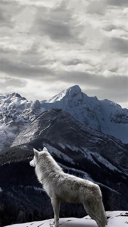 Wolf Iphone Background Wallpapers Mountain Winter Desktop