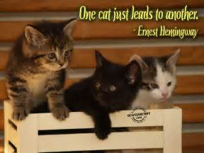 cat sayings cat pictures with quotes cat picture cat