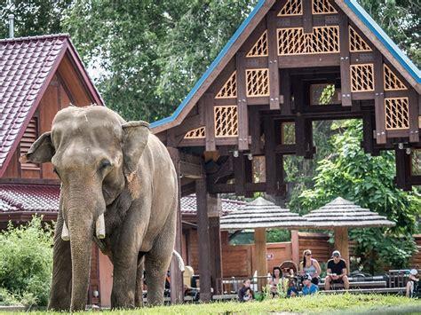 elephant asian zoo denver