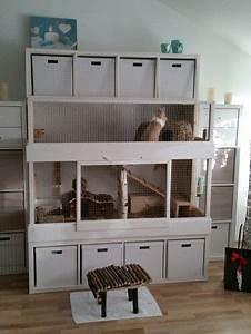 Meerschweinchen Gehege Ikea : kaninchen haus muffin pinterest kaninchen kaninchenstall und meerschweinchen ~ Orissabook.com Haus und Dekorationen