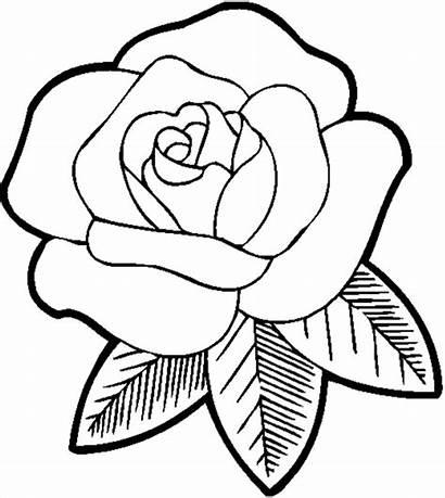 Rose Drawing Drawings Easy Simple Unique Getdrawings