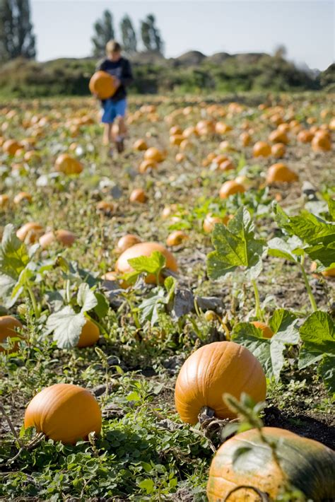 Pumpkin Picking Harford County Maryland by 28 Waldorf Maryland Pumpkin Patch 19 Best Images