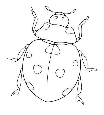 ladybug coloring page  printable coloring pages