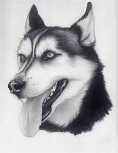 U0026quothuskyu0026quot By Alishamarie12deviantartcom Fine Arts