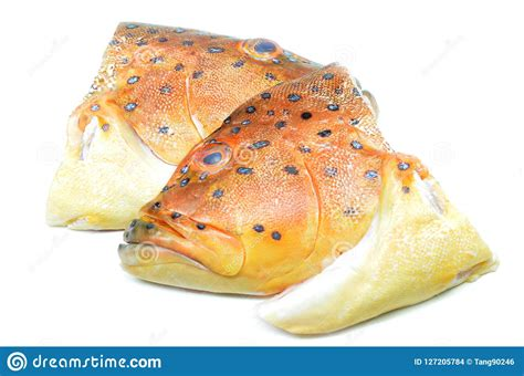 fish head grouper background preview