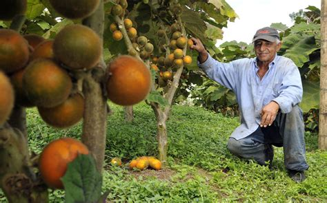 kenya brexit costs fruit shippers   day