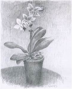 Gallery Orchid Pencil Sketches