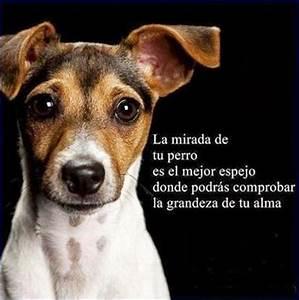 La mirada de tu perro es el mejor espejo donde podrás comprobar la grandeza de tu alma