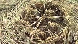 REAL UFOs Making Crop Circles Caught on Camera (Video ...