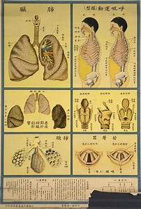 Chinese Public Health Posters  Understanding Human Body