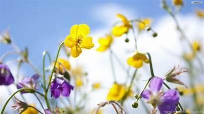 Spring Desktop Flowers Wallpapers Flower Screensavers Background