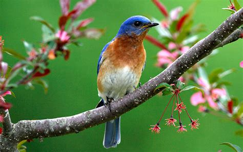 Images Of Nature Qygjxz
