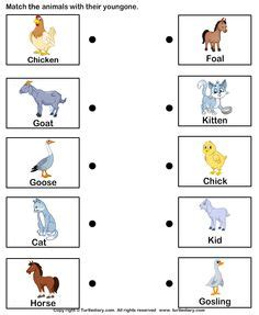 forest animals first grade and literacy on pinterest