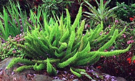 the way herbal fertility