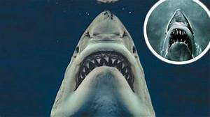The Moment A Great White Shark Perfectly Recreated The ...