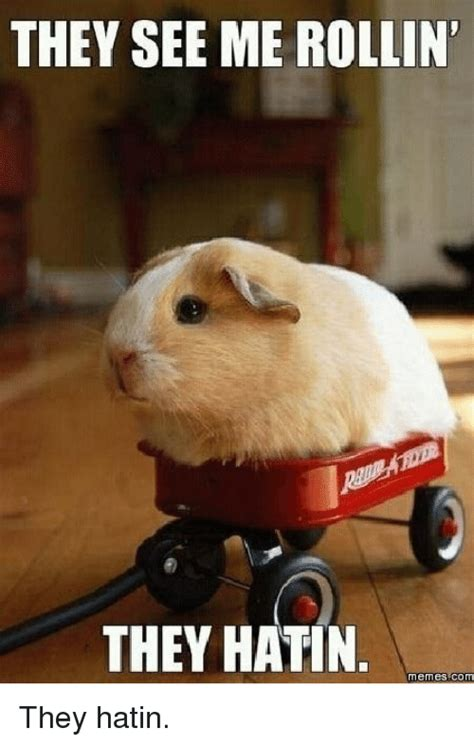 Meme Rege - they see me rollin they hatin meme 28 images they see me rollin they hatin they see me
