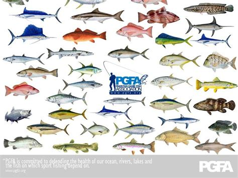 florida fish species fish compatibility chart